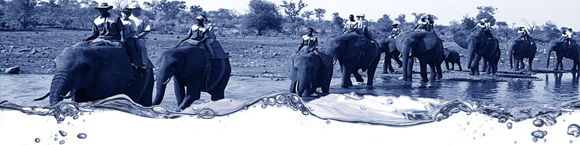cresta-elephants-zimbabwe-bulawayo-laundry-catering